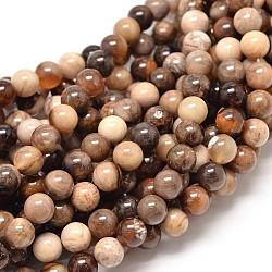 """Naturel fossile pierre amérique rondes chapelets de perles, 8mm, trou: 1mm; environ 48 pcs/chapelet, 16.1""""(G-P075-51-8mm)"""