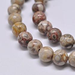 "Chapelets de perles maifanite/maifan naturel pierre , rond, 6mm, trou: 1mm; environ 62 pcs/chapelet, 15.1""(X-G-F353-6mm)"
