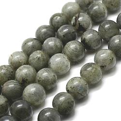 Natural Labradorite Bead Strands, Round, 6mm, Hole: 1mm; about 61pcs/strand, 15''