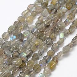 """Chapelets de perles en labradorite naturelle , nuggets, 5.5~10x4~8mm, Trou: 1mm; Environ 15.3"""" (39cm)(G-P406-49)"""