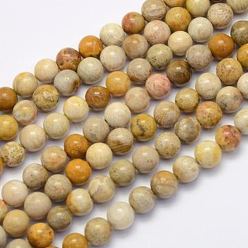 Natural Fossil Coral Beads Strands, Round, 8~8.5mm, Hole: 1mm, about 49pcs/strand, 15.7 inches(40cm)(G-G697-F01-8mm)
