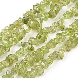 péridot naturelles brins de perles, puce, 4~8x2.5~7 mm, trou: 0.7 mm, 15.7~16 (40~40.5 cm)(X-G-F666-04)