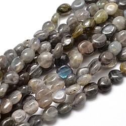 """Pépites de labradorite naturelle perles brins, 4~8x6~9x5~7mm, trou: 1 mm; environ 15.3""""~15.7""""(G-J336-08)"""