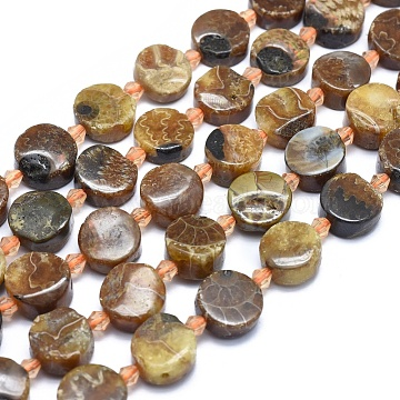 12mm Flat Round Fossil Beads