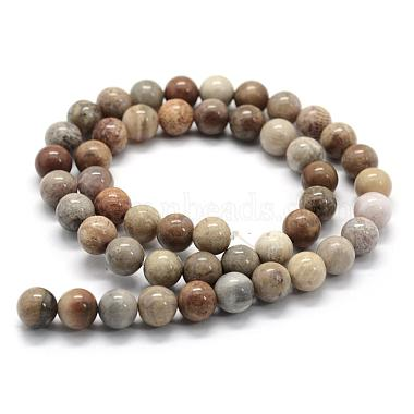 Natural Fossil Coral Beads Strands(G-G763-12-6mm)-2
