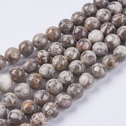 Chapelets de perles maifanite/maifan naturel pierre , rond, 8mm, trou: 1mm; environ 46 pcs / brin; 15.3