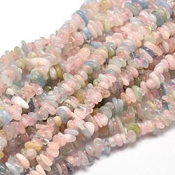 """Естественно Morganite чип бусины пряди, 5~14x4~10 мм, отверстия: 1 mm; о 15.5""""~16.1""""(G-E271-84)"""