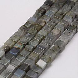 Natural Labradorite Beads Strands, Cube, 10~11x10~11x10~11mm, Hole: 1mm; about 36pcs/strand, 14.9inches(38cm)