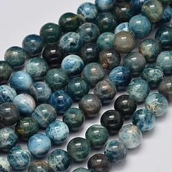 rondes apatite naturelle perles brins, classe ab, 8 mm, trou: 1 mm; environ 51 perle / brin, 15.7 pouces