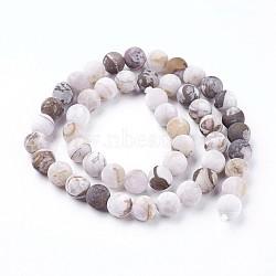 """Chapelets de perles en bois pétrifié amérique naturelle, mat, rond, 8mm, trou: 1.2mm; environ 46~47 pcs/chapelet, 14.8''~15.51"""" (37.7~39.4 cm)(G-P430-03-C)"""