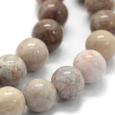 Natural Fossil Coral Beads Strands(G-G763-12-6mm)-3