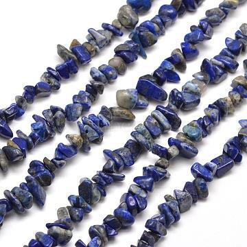 SUNNYCLUE Natural Lapis Lazuli Chip Beads, 5~8x5~8mm, Hole: 1mm, about 400pcs/box(G-SC0001-30)