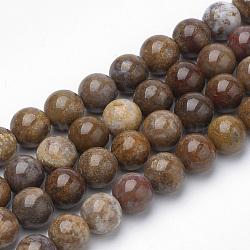 """Perles de bois naturel pétrifié (importé d'Amérique), rond, 8~8.5mm, trou: 1mm; environ 47 pcs/chapelet, 15.5""""(X-G-Q462-136-8mm)"""